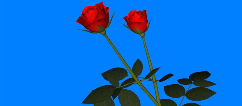 WebGL Rose